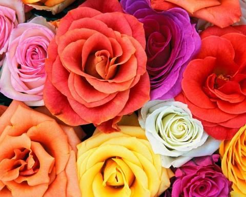 Hd-Flowers-7